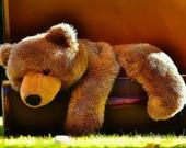 Плюшевый медвежонок - Пазл
