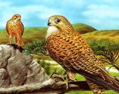 Пятнашки Птицы Прерий