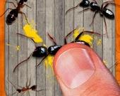 Раздави насекомое