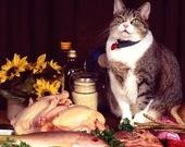Пазл: Смешные котики