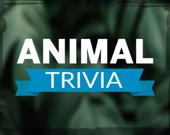 Викторина: животные