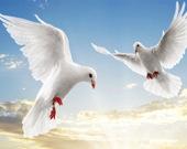 Пятнашки: Летящие птицы