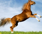 Собери лошадь