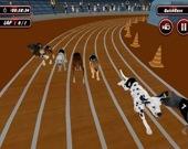 Настоящий симулятор собачьих бегов 2020