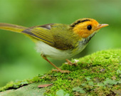 Пятнашки: Птицы
