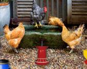 Птицеферма: спасение пасхи