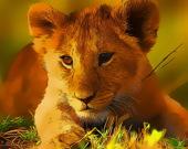 Пазл: Детёныши диких животных