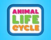 Жизнь животных