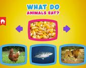 Что едят животные?