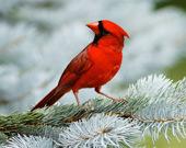 Птицы: игра-пазл