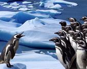 Пятнашки: Пингвины