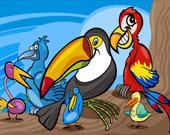 Раскраска: Экзотические птицы