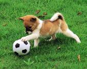 Пазл с игривым щенком