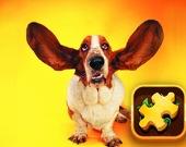 Пазл: Игривые собаки