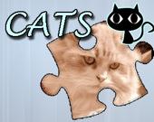 Головоломка: Кошки