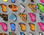 Бабочка Киодай