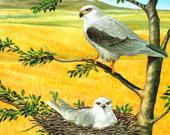 Пазл с хищными птицами