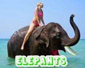 Пазл: Слоны