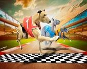 Гоночная игра Сумасшедшая собака