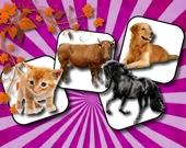 Домашние Животные: игра на память