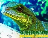 Китайский Водяной Дракон: Головоломка