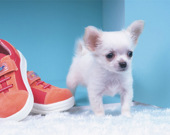 Пазл: Милые щенки