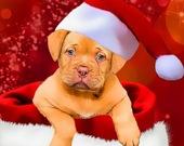 Рождественские щенки - Пазл