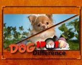 Найдите отличия: Собаки