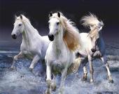 Пятнашки с лошадьми